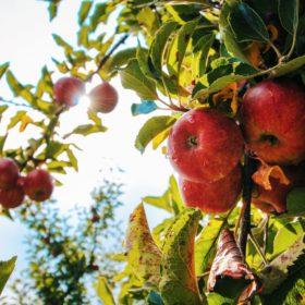 食物連鎖型営業について